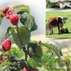 Santa Cruz County Agriculture